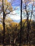 Goldener Wald mit Ansicht Stockbilder