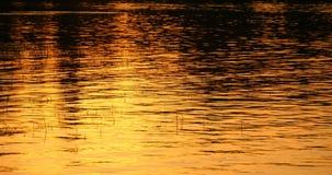 Goldener Wasser Hintergrund stock video