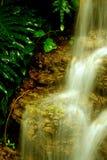 Goldener Wasserfall Stockfoto
