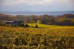 Goldener Weinberg und Weinkellerei Stockfotos