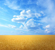 Goldener Weizen Stockfotografie