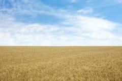 Goldener Weizen auf dem Korngebiet lizenzfreies stockfoto