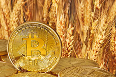 Goldenes Bitcoins Lizenzfreie Stockfotografie