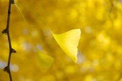 Goldenes Blatt, das im Wind durchbrennt Stockbild