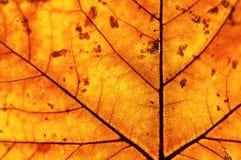 Goldenes Blatt im Herbst Lizenzfreie Stockbilder
