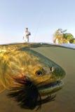 Goldenes Dorado auf einer Fliege Rod Unterwasser Lizenzfreie Stockbilder