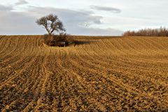 Goldenes Feld Stockfotos