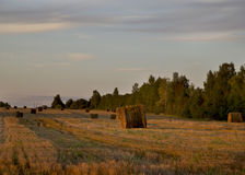Goldenes Feld Stockfoto
