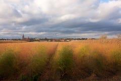 Goldenes Feld in den Niederlanden Stockfotos