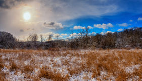 Goldenes Feld im Winter Stockfotografie