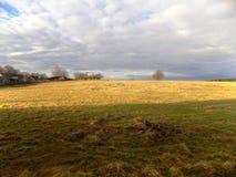 Goldenes Feld, Northumberland, nr Crookham, England Großbritannien Stockbild
