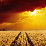 Goldenes Feld und Sonnenuntergang Lizenzfreie Stockfotografie