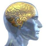 Goldenes Gehirn Lizenzfreies Stockbild