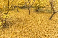 Goldenes Gelb stockbild