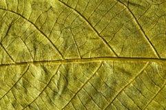 Goldenes Herbstblatt Lizenzfreie Stockfotos