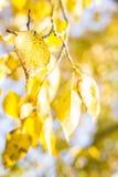 Goldenes Herbstblatt Lizenzfreies Stockfoto