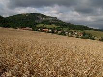 Goldenes Kornfeld Lizenzfreies Stockfoto