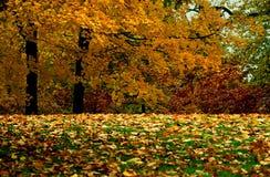 Goldenes Laub Stockbild