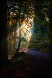 Goldenes Licht des Herbstes Lizenzfreie Stockfotografie