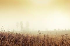 Goldenes nebeliges Feld Stockbilder