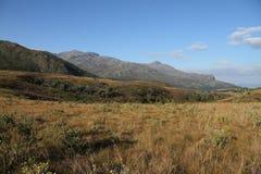 Goldenes priarie mit Berglandschaft Stockbild