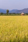 Goldenes Reisfeld mit Stroh in Thailand Asien Lizenzfreie Stockfotografie