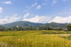 Goldenes Reisfeld mit thailändischem Tempel auf dem Berg Lizenzfreies Stockfoto