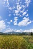Goldenes Reisfeld mit thailändischem Tempel auf dem Berg Lizenzfreie Stockfotografie