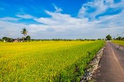 Goldenes Reisfeld, Straße und ein Haus Lizenzfreie Stockfotos
