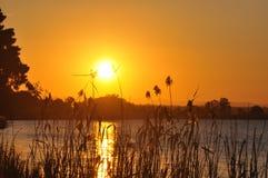 Goldenes Sonnenuntergang- und Flussufergras stockbilder