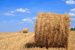 Goldenes Strohstoppelfeld im Herbst Lizenzfreies Stockfoto
