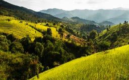 Goldenes Terrassenreisfeld, eine schöne Naturschönheit auf Berg in Nan, Khun Nan Rice Terraces, Boklua Nan Province, Thailand Lizenzfreie Stockbilder