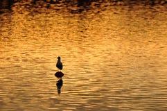 Goldenes Wasser Lizenzfreies Stockfoto