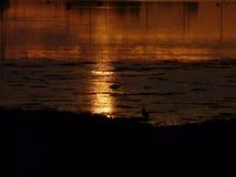 Goldenes Wasser mit Reiher und großem Brachvogel Stockfotos