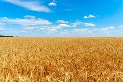 Goldenes Weizen-Feld Lizenzfreie Stockfotos