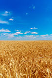 Goldenes Weizen-Feld Stockfotografie