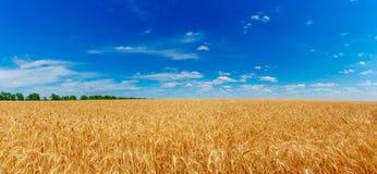 Goldenes Weizen-Feld Stockbilder