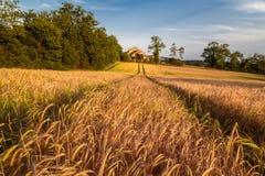 Goldenes Weizen-Feld breit u. fruchtbar stockfoto