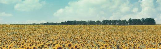 Goldenes Weizenfeld, ländliche Natur des Panoramas, Ernte und Landwirtschaftshintergrund Lizenzfreies Stockbild