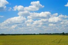 Goldenes Weizenfeld mit blauem c Lizenzfreie Stockbilder