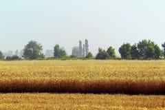 Goldenes Weizenfeld mit blauem Himmel stockfoto