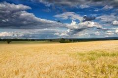 Goldenes Weizenfeld unter einem teils bewölkten Himmel Stockbild
