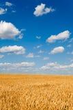 Goldenes Weizenfeld unter Himmel stockbild