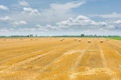Goldenes Weizenfeldernten Stockbilder