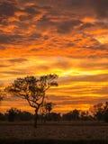 Goldenes Wolken- und Baumschattenbild Lizenzfreie Stockfotos