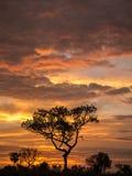 Goldenes Wolken- und Baumschattenbild Stockfoto