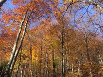 Goldenforest in plitvica selo, Croatia royalty free stock images