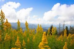 Goldenrod e montanhas em calvo redondo fotos de stock royalty free