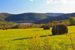 goldenrod hayfield Стоковые Фото