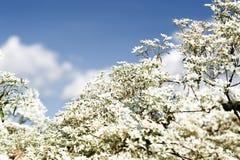 Goldenrod kwiat miękkiej części styl w pastelowym brzmieniu Obrazy Stock
